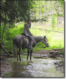 Cabriola Classica - Paso Fino Mare under saddle going through creek on trail.
