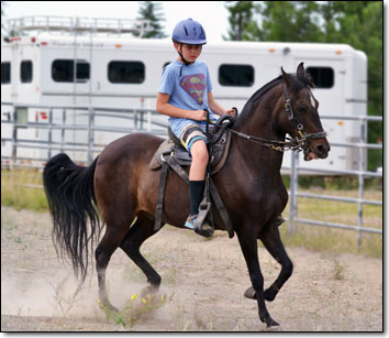 Paso Fino Gelding, GI, being ridden by 11 year old boy.
